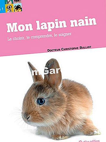 Copertina del libro My Little Rabbit di EsdemGarden Editions