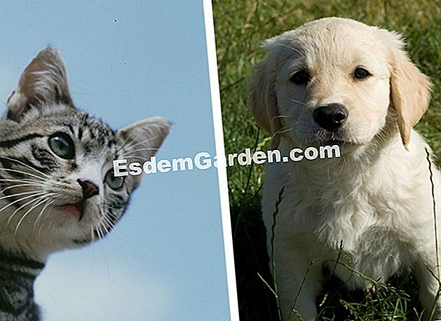Kitten and puppy - photomontage
