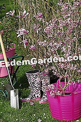 Prunus ültetvény - F. Marre - esdemgarden.com- Gally Farms