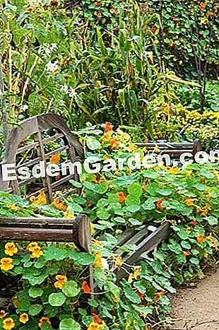 Bench - F. Marre - EsdemGarden - Floral Park of the Source