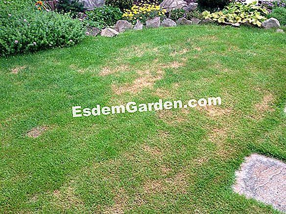 Unsere Tipps Für Einen Schönen Rasen Alles über Gartenarbeit Und