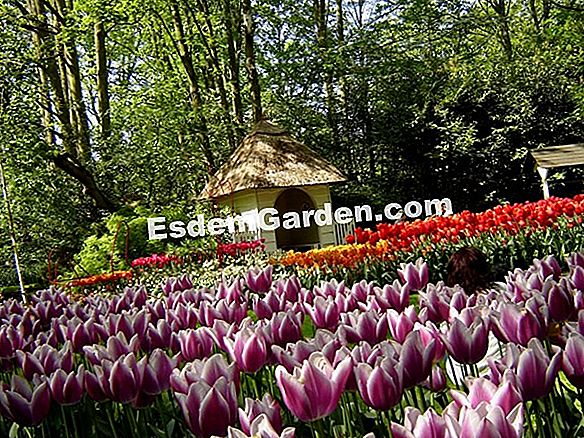 Der Keukenhof Park in Holland