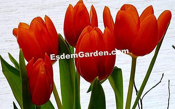 Halten Sie Die Schnittblumen Alles über Gartenarbeit Und
