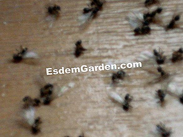 Kochendes Wasser Gegen Ameisen Von Glaser Alles Uber Gartenarbeit