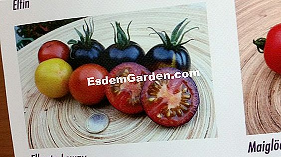 Tomatenstand