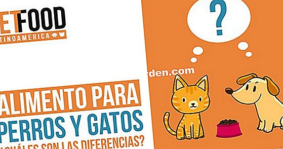 Gatos de raza: ¿qué regulaciones?