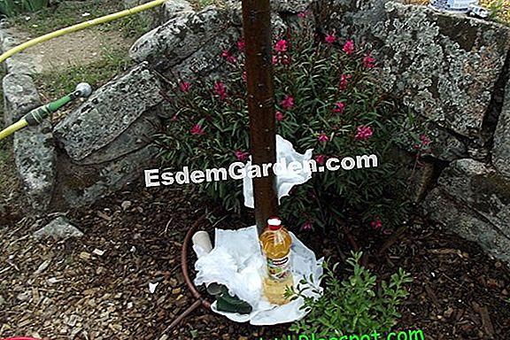 Cómo Evitar Las Hormigas En Mi Jardín? 🌿 Todo Sobre Jardinería Y ...
