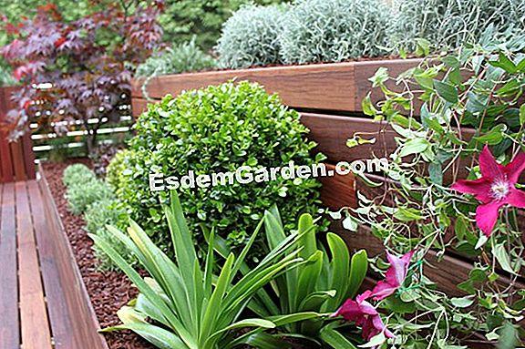 Plantas Resistentes A La Pulverizacion En Los Jardines De Etretat - Plantas-de-jardin-resistentes