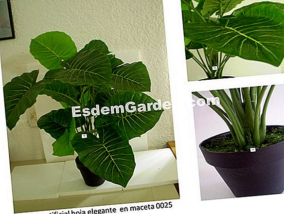 Plantas decorativas de follaje