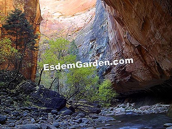 Hanging Gardens of Zion (USA)