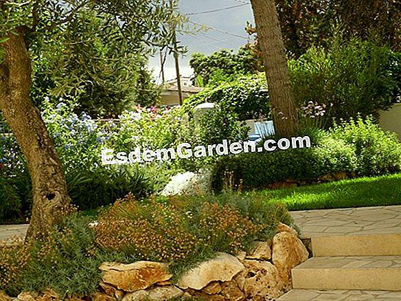 Video Pollice Verde Puntata 11 Giardino Mediterraneo Un Giardino Mediterraneo