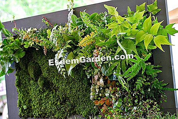 Il mio giardino in miniatura 🌿 tutto su giardinaggio e