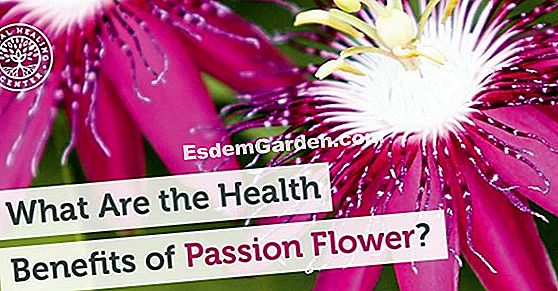 Fertilize passionflower