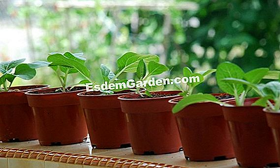 Tips Berkebun April