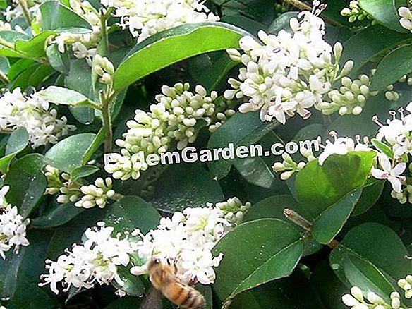 Groenblijvende Planten Voor Bloembakken.Bloembakken Met Wintergroen Blad Alles Over Tuinieren En