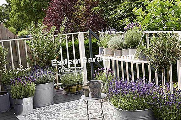 Tuinieren Op Balkon : November op het balkon en op het terras 🌿 alles over tuinieren en