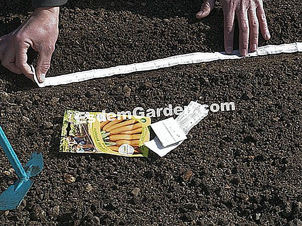 Gartengesten: Seeding Ribbon Seeds